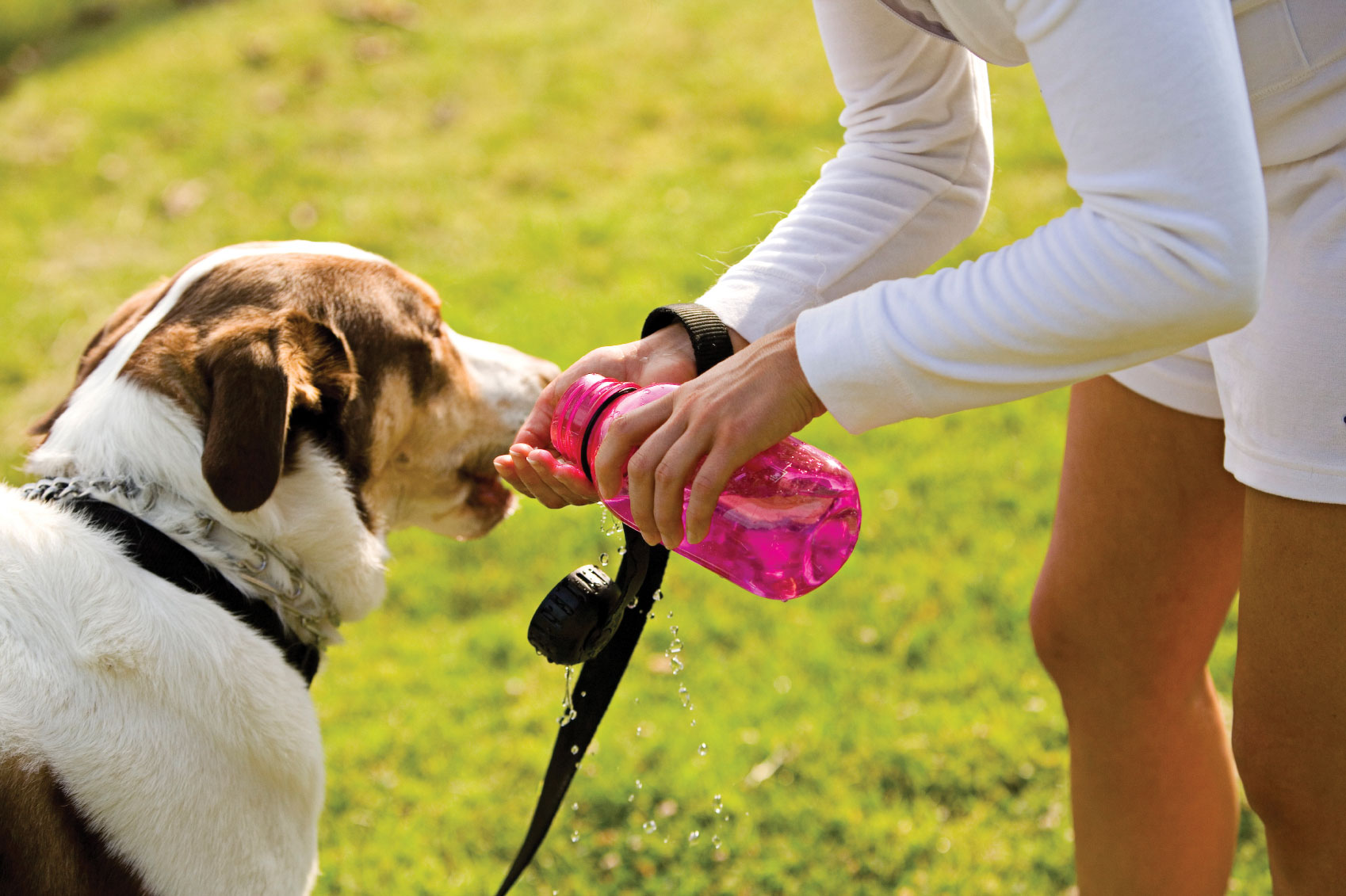 Dogs Panting And Drinking A Lot Of Water