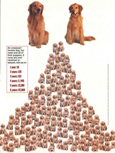 Spay Neuter pyramid