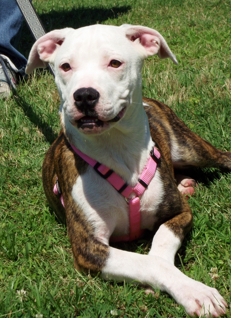 Adoptable Dogs At Petco Saturday June 29 The Humane
