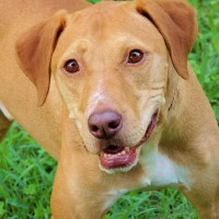 Buddy - Click to visit his profile!