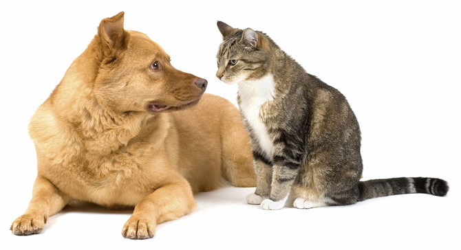 cat-and-dog-1