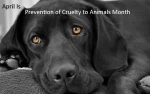 Cruelty Prevention graphic