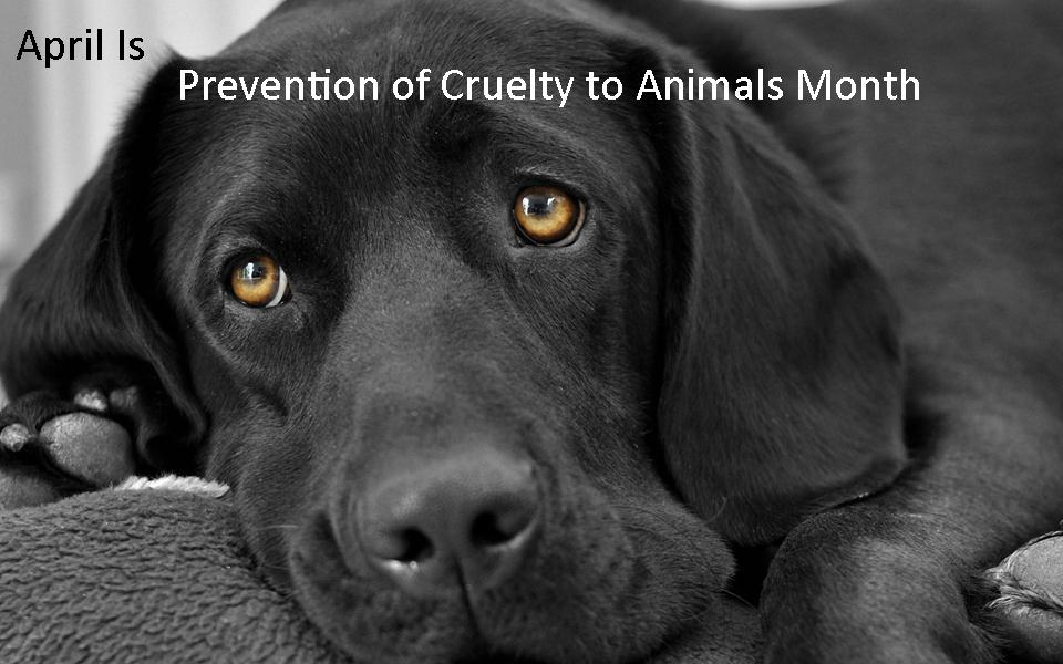 Animal cruelty should be eliminated in society