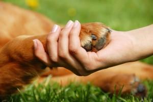stockfresh_712587_dog-paw-and-hand-shaking_sizeM