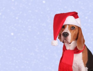 Cute Dog at Christmas Time