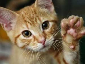 saving-cats
