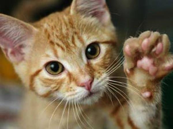 kittens boise