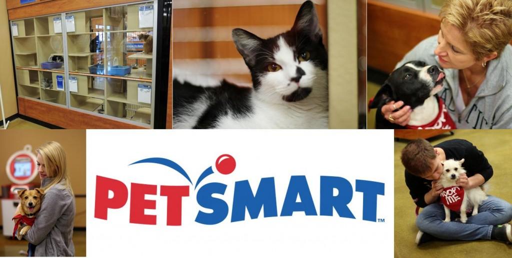 Petsmart Banner