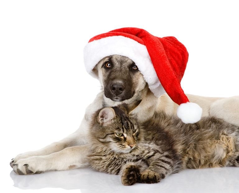 xmas-dog-and-cat