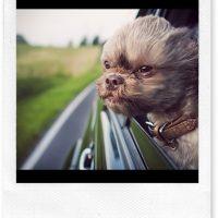 dog-riding2