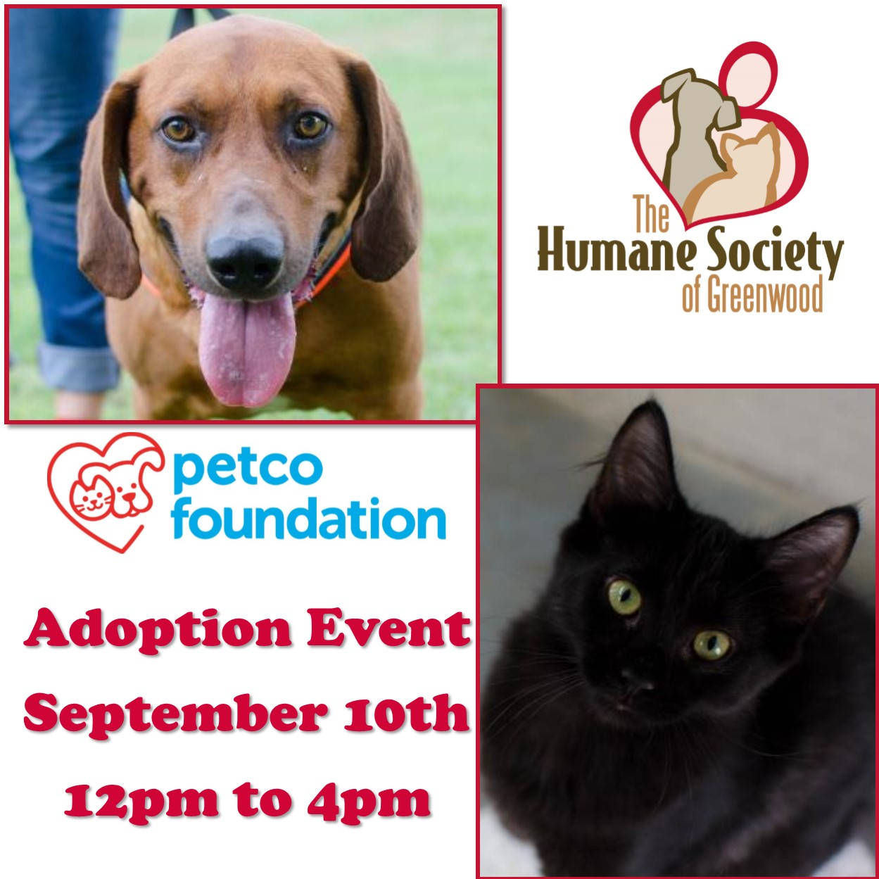 Adoptable Dogs and Cats at Petco Saturday, September 10th, 12pm to